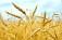 PD-Sinistra VdA, approvvigionamento alimenti per celiaci